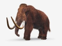 wooly-mammoth-1024